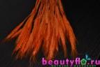 Пшеница оранжевая