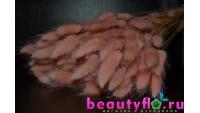 Лагурус нежно-розовый