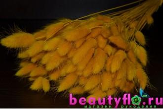 Лагурус желтый